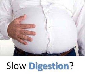 slow digestion