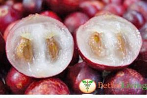 Discover nature's richest source of Vitamin C. Natural Traditions Camu Camu berry!