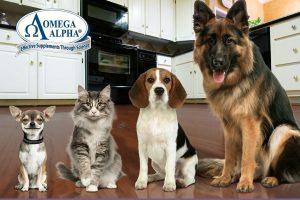 """Free Pet Health Seminar – """"Prevent Disease Naturally!"""""""