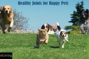 Improve Your Pet's Quality of Life