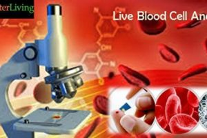Live and Dry Blood Cell Analysis available at Better Living in Toronto